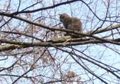 Puzzle chat dans un arbre