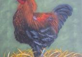 peinture coq marans