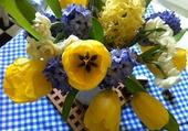 Jolies fleurs de primtemps !!
