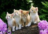 Quatre chatons fripons