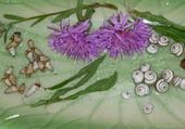 Qnautia (fleurs)