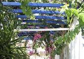 Une ruelle fleurie en Crète