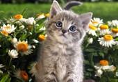 Un chaton au milieu des fleurs