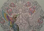 Début  de coloriage  1