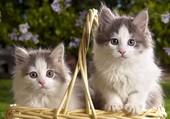 Deux beaux chatons
