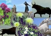 Symboles de Camargue des Stes Maries
