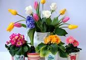 Présentation de fleurs