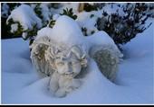 Angelot sous la neige