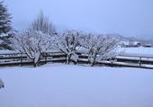 Neige 2 février 2015