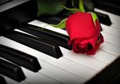 Une rose rouge sur un piano