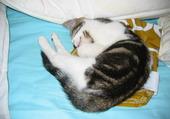 Puzzle le chat qui dort