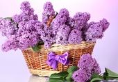 Un panier de lilas