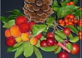 Fruits et baies