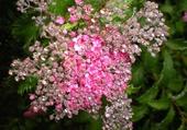Puzzle Perles de rosée
