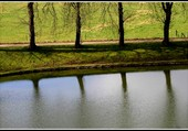 Reflets dans un parc