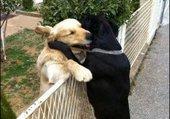 bisous entre amis