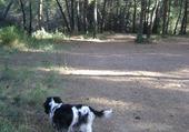 Chanel en forêt