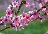 Fleurs d