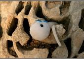 Puzzle Spermi dans les ruines.