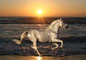 Cheval au coucher du soleil