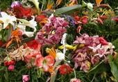 fleurs de madere