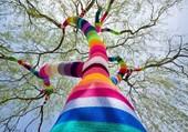 arbre au couleur