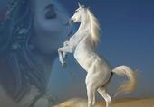la beauté du cheval blanc