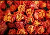 Bouquets sur le marche