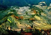 Paysage Thaï