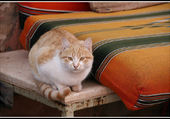 Le chat de Petra