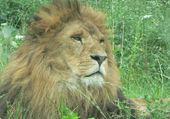 Lion du château du Colombier en Aveyron