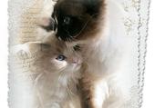 Puzzle lettre aux chats