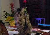 CODA : une chatte intellectuelle