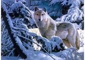 Puzzle Un loup en hiver