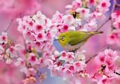 Eclosion de printemps