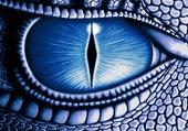 oeil de dragon bleu