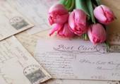 Cartes postales et tulipes