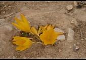 Fleur inconnue dans le désert