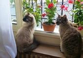 Chats devant une fenêtre
