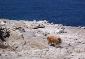 Notre chien Ulysse en Sardaigne