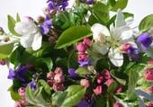 Violettes et fleurs de pommier