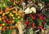 La rocaille de mon jardin
