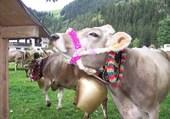 Puzzle En Autriche