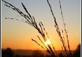 Les brindilles au lever du soleil