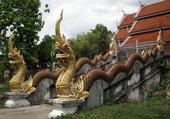 dragons en thaïlande