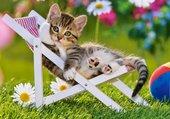 Puzzle un petit chat malicieux!