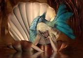 une sirene dans sa coquille