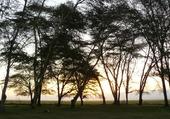 Lever de soleil sur Amboseli.