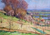 Le champ de cerisiers