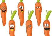 puzzle carottes